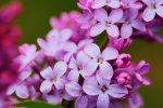 Fototapeten rosa Blume